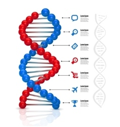 Dna infographics vector