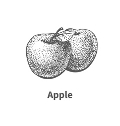 Hand-drawn apple vector