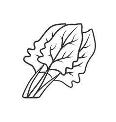 Spinach linear icon vector