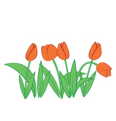 tulips on white background vector image vector image