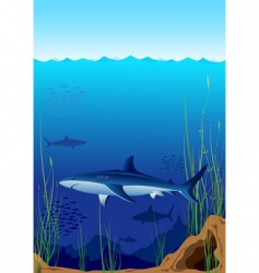 underwater world with sharks vector image