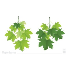 Maple branch with green leaves on a white vector image