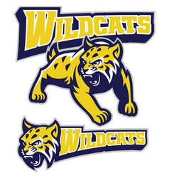 angry wildcat mascot vector image vector image