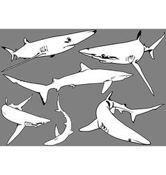 Blue Shark Set vector image