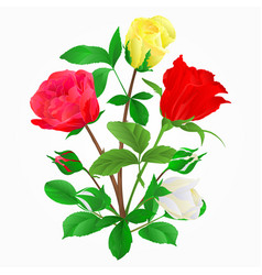 Bouquet of rosebuds vector