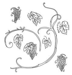 line art set grape plant vector image