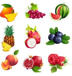 Set of fruits and berries with leaves vector