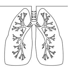 single continuous line art anatomical human lungs vector image