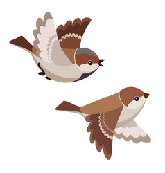 Two flying house sparrows isolated vector