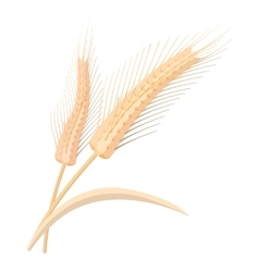 Two stalks of ripe barley cartoon icon vector image