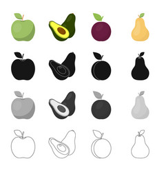 Green apple ripe avocado plum fruit pear vector