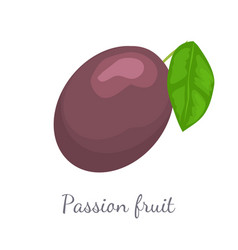 Passionfruit with leaf exotic juicy fruit vector