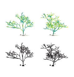 seaweed algae hand drawn water plant with stones vector image