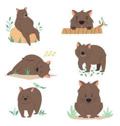 set australian wombats in different poses vector image