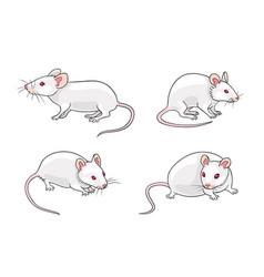 White mice vector