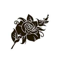 Black rose image vector