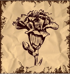 Garden carnation isolated on vintage background vector image