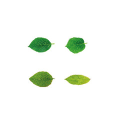 green leaves isolated on white background vector image vector image