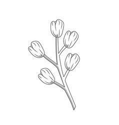 Line chamomile plant ingredient to condiment of vector