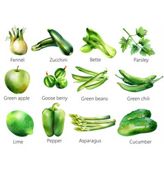 Set green vegetables and fruits watercolor vector