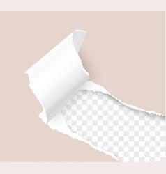 Torn paper corner realistic 3d template vector