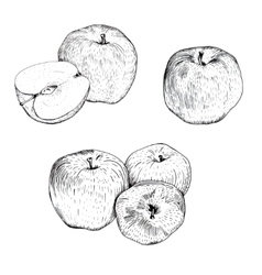 Ink apple sketches set vector image vector image