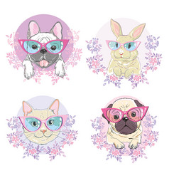 pets face dog cat and rabbit vector image