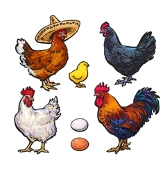 Set of different chickens vector image