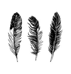 3 hand drawn black and white feathers vector