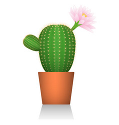 cactus in a red clay pot flowering plant white vector image