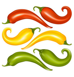 fresh chili vector image