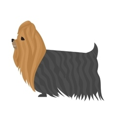 Dog yorkshire terrier vector image vector image