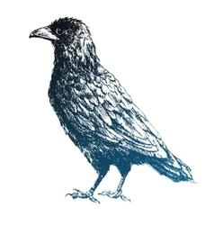 Beautiful raven vector image