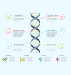Dna infographic genetic spiral genomic model vector