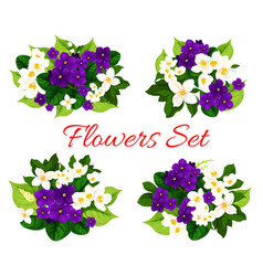 floral bouquets of blooming flowers vector image
