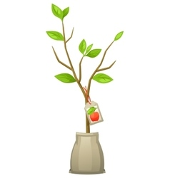 Seedling of apple tree with tag for vector image