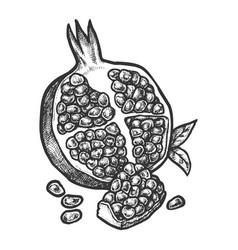 Sketch pomegranate fruit hand drawn design vector