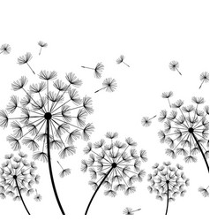 White background with stylized black dandelion vector
