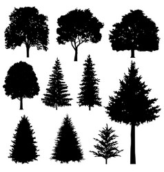 forest coniferous and deciduous fir trees vector image