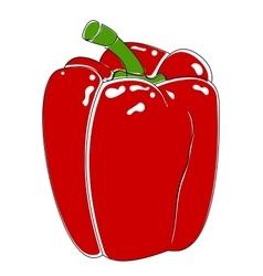 Bell pepper bulgarian vector image