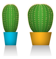 Cactuses in colorful pots different forms white vector