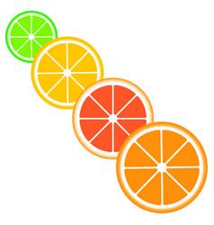 citrus slices of lemon vector image