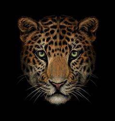 Color portrait jaguar looking forward on a blac vector