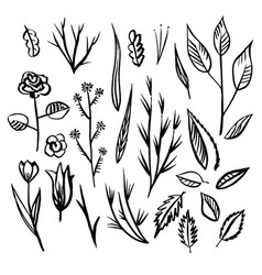 floral designs detail sketch vector image
