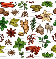 Herbs And Spice Color Sketch Pattern vector