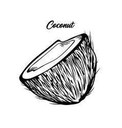 open coconut hand drawn vector image