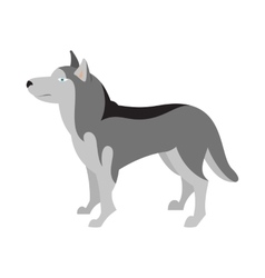 Siberian husky dog breed vector image vector image