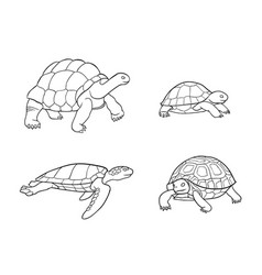 Tortoise and turtle in outlines vector