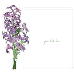 hyacinth minimal card vector image