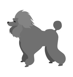 Poodle dog flat vector image vector image